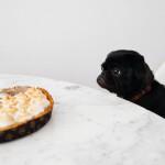 31_Koks šunų maistas tinkamiausias, esant jautriam skrandžiui